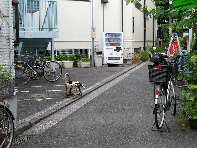 裏道椅子と黒白猫1