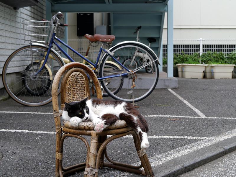 裏道椅子と黒白猫2