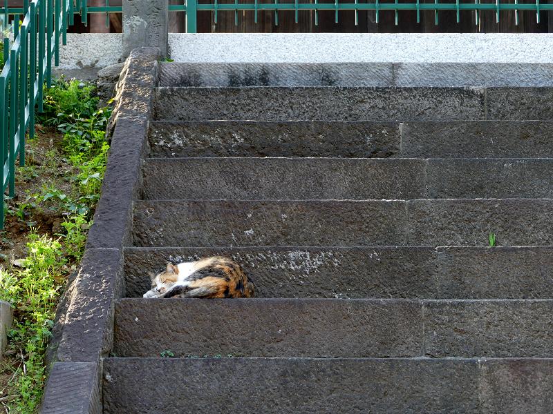 ツツジと階段と三毛猫2