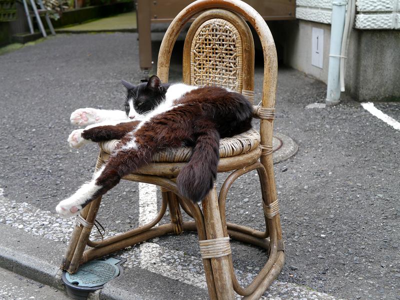 裏道椅子と黒白猫3