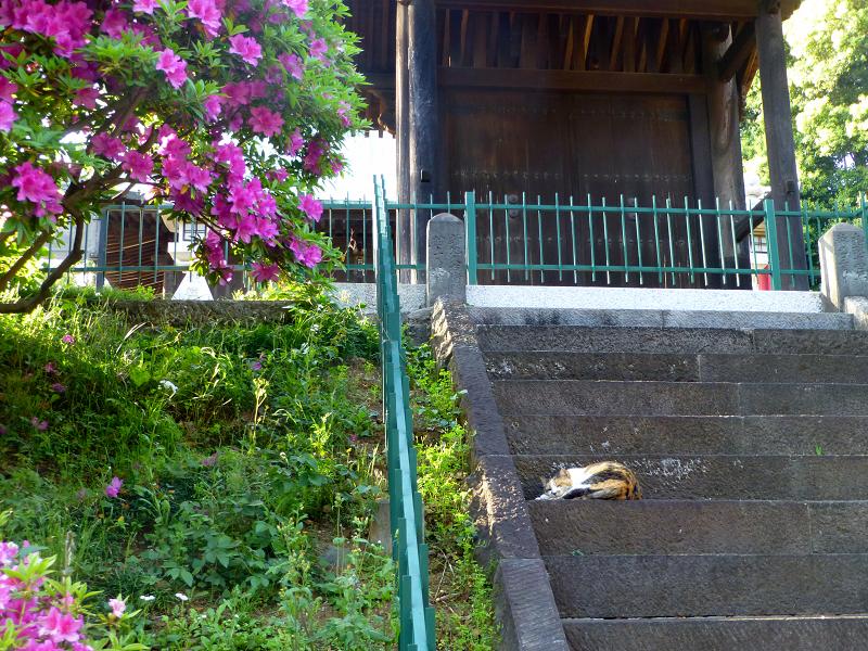 ツツジと階段と三毛猫3