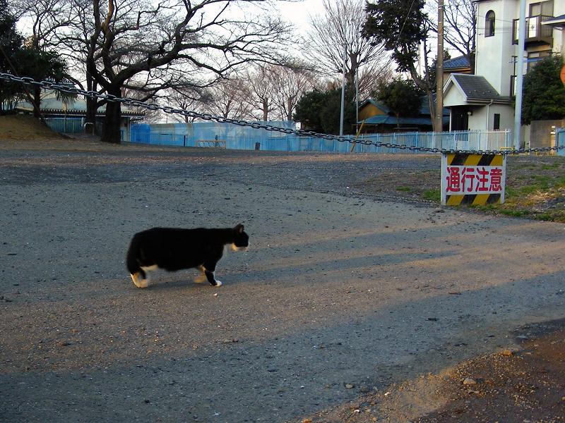 駐車場で転がる黒白猫1