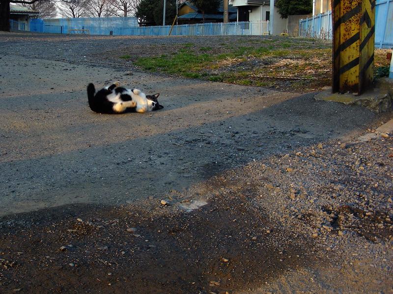駐車場で転がる黒白猫2