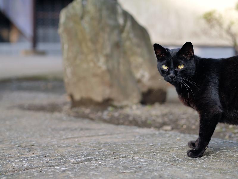 石碑と黒猫1