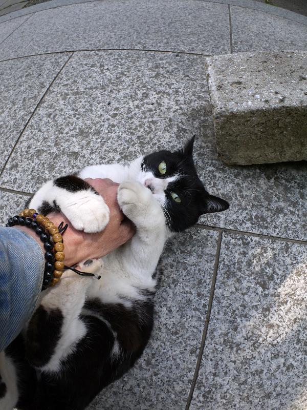 仰向けで大暴れする黒白猫2