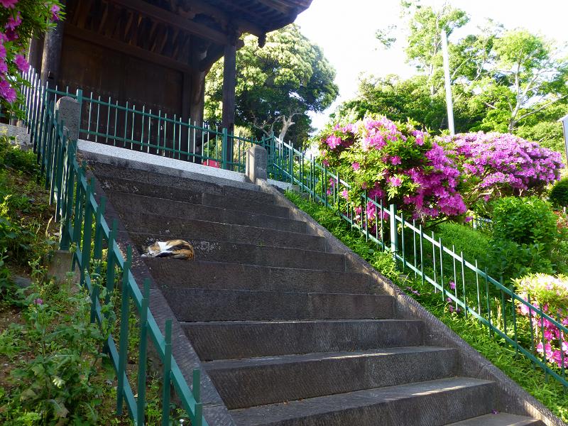 ツツジと階段と門と三毛猫2