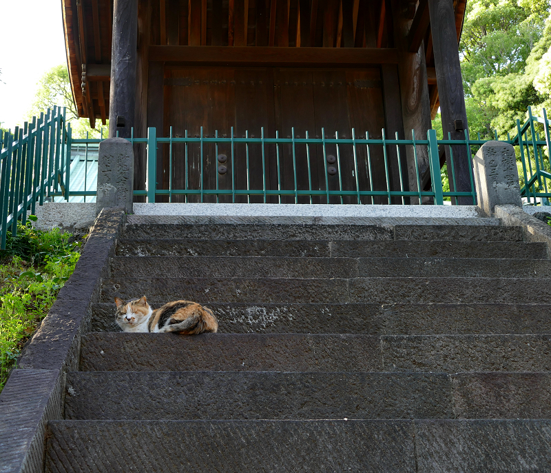 ツツジと階段と門と三毛猫3