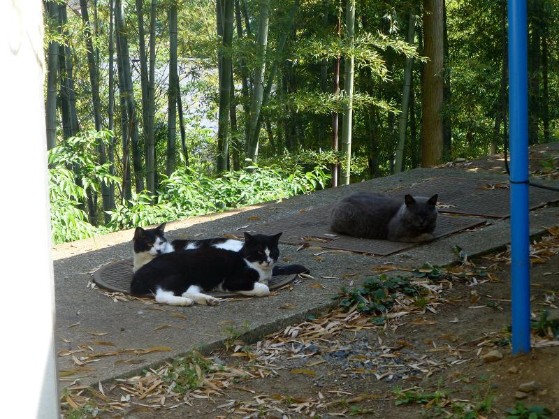 竹林と猫たち1