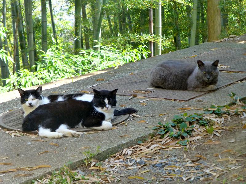 竹林と猫たち2