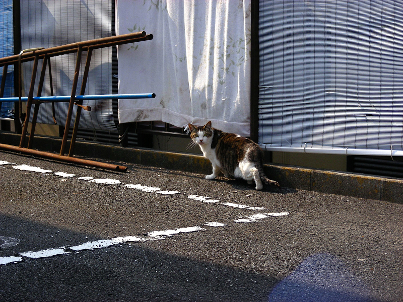 逃げる青空ガレージの猫たち1