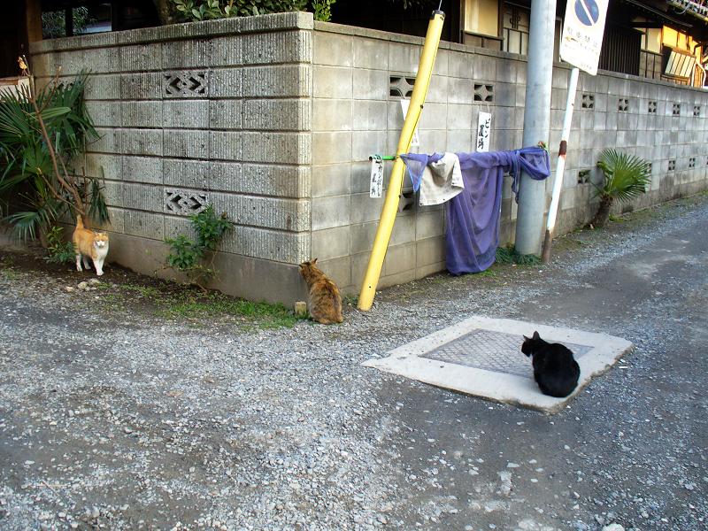 民家ブロック塀の猫たち1