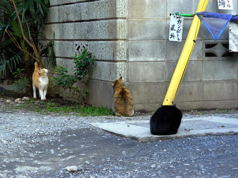 民家ブロック塀の猫たち2