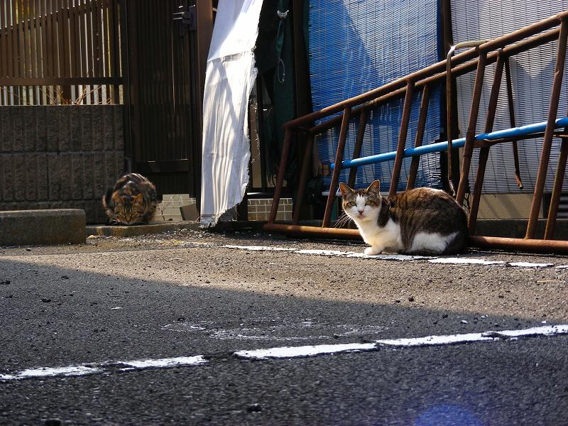 逃げる青空ガレージの猫たち2