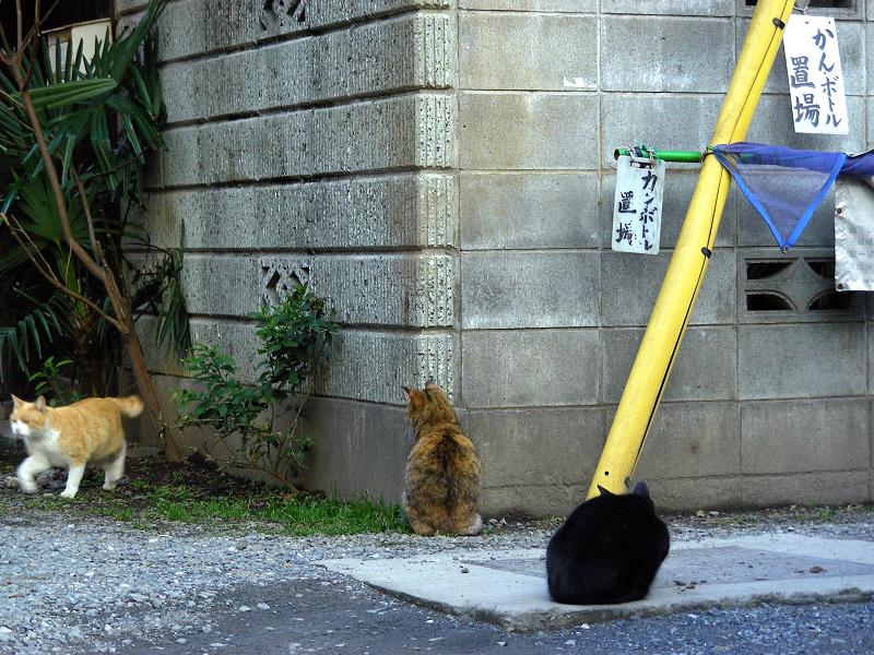 民家ブロック塀の猫たち3