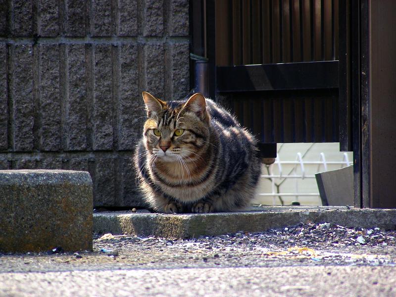 逃げる青空ガレージの猫たち3