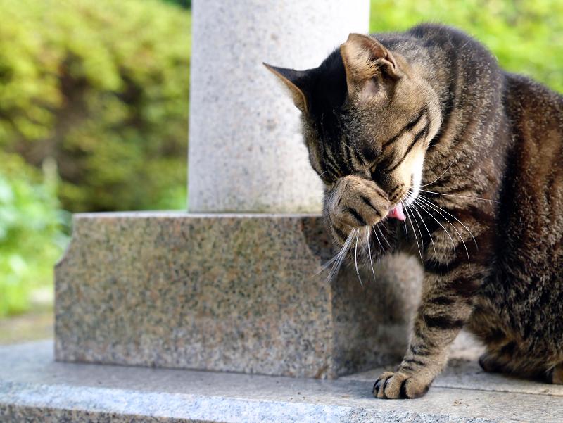 柱の横で顔を洗うキジトラ猫1