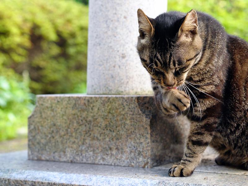 柱の横で顔を洗うキジトラ猫2