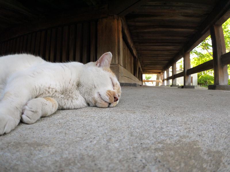 犬走りで寝る白茶猫3