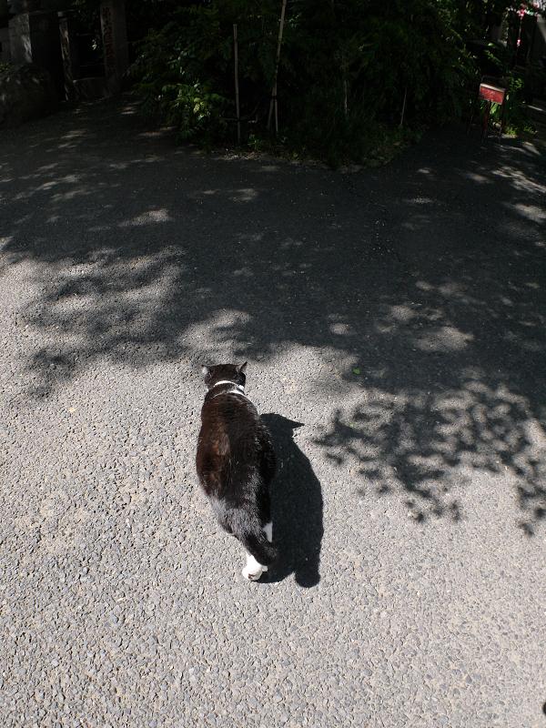 木漏れ日と黒白猫1