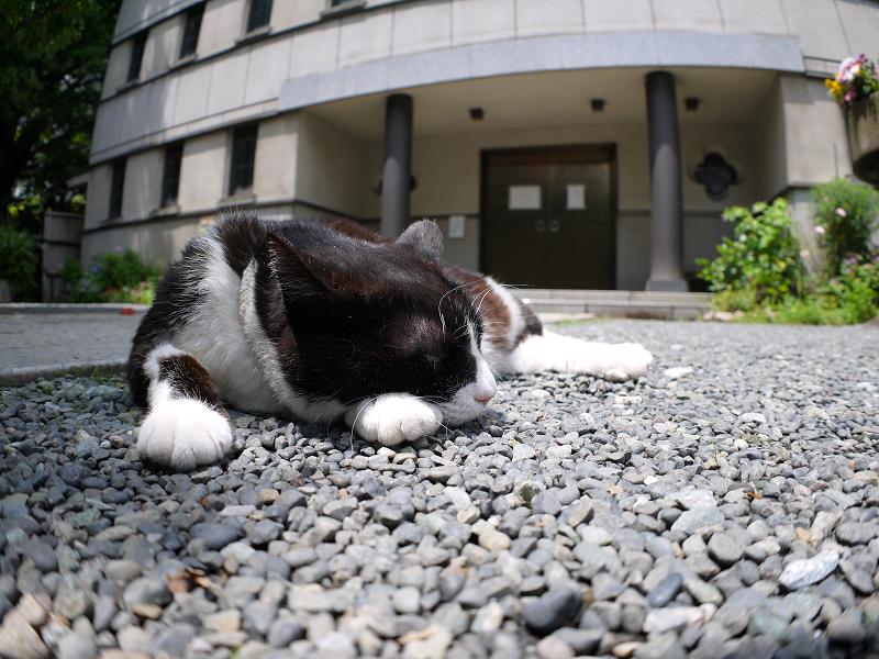 境内玉砂利で寝ている黒白猫2
