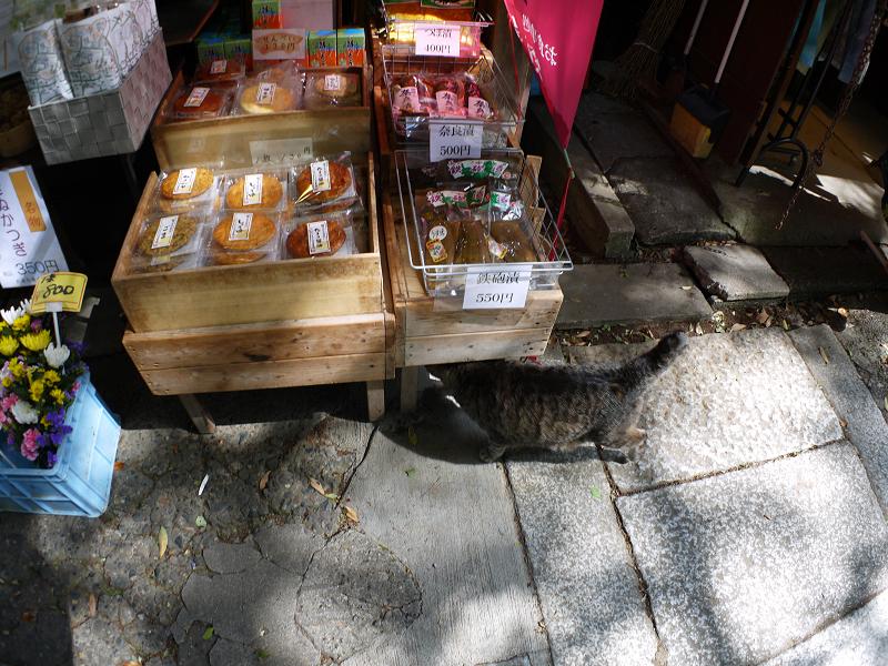商品台とキジトラ猫1
