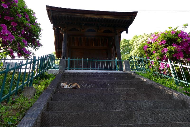 見上げる階段と三毛猫1