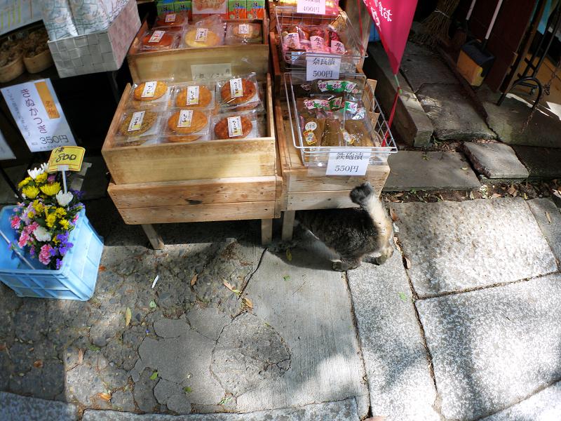 商品台とキジトラ猫2