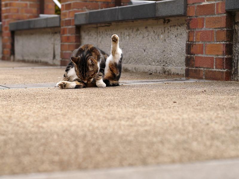 赤煉瓦支柱の前のキジ白猫2