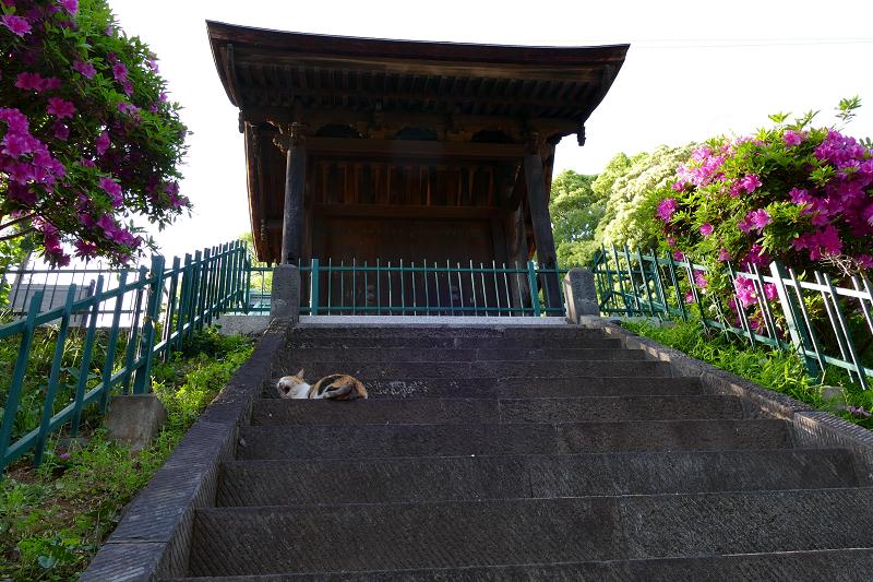 見上げる階段と三毛猫2