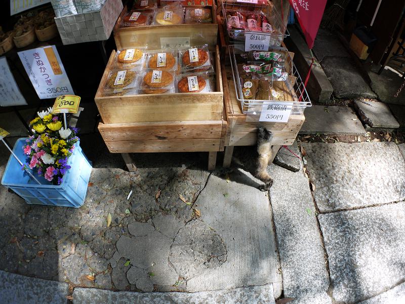 商品台とキジトラ猫3
