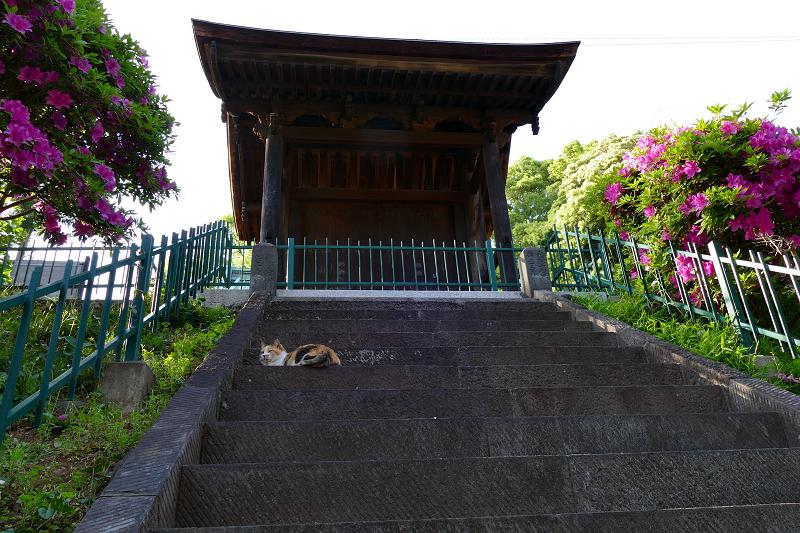見上げる階段と三毛猫3