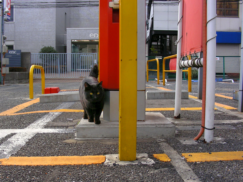駐車場の黒猫