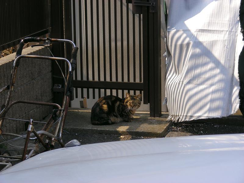 ガレージ隅っこの猫たち1