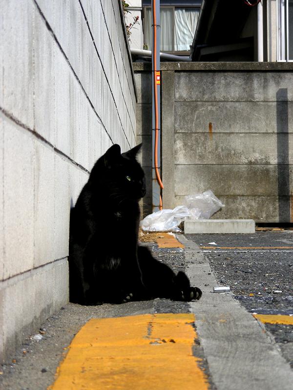 ブロック塀に寄り掛かる黒猫1