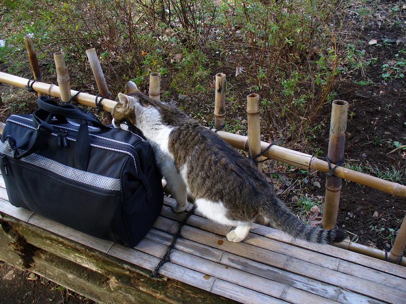 ベンチとバッグとキジ白猫1