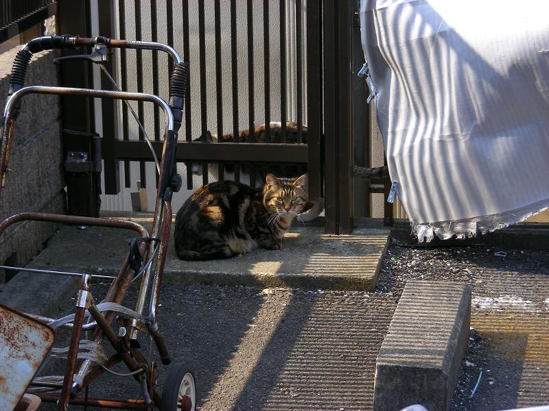 ガレージ隅っこの猫たち2