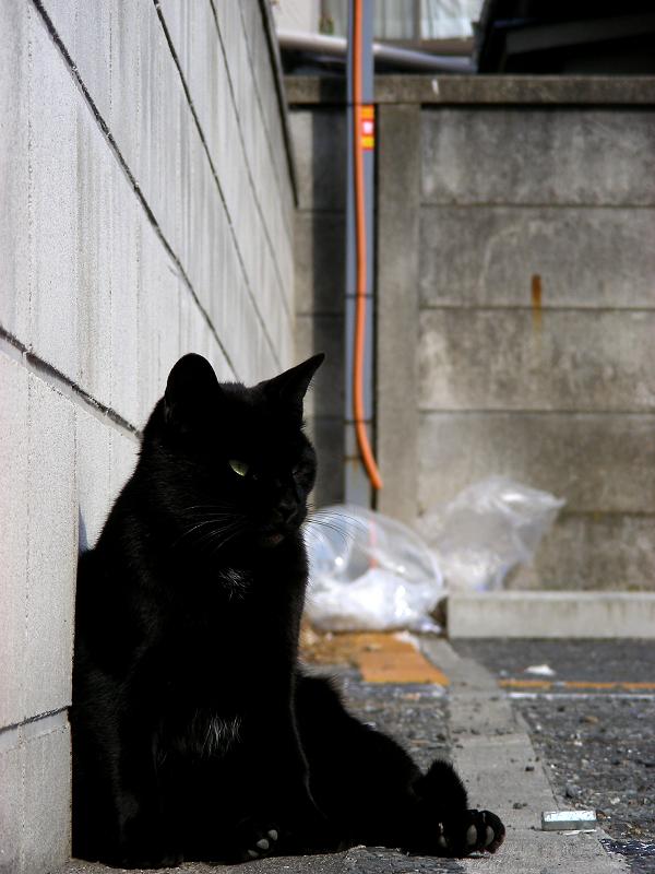 ブロック塀に寄り掛かる黒猫2