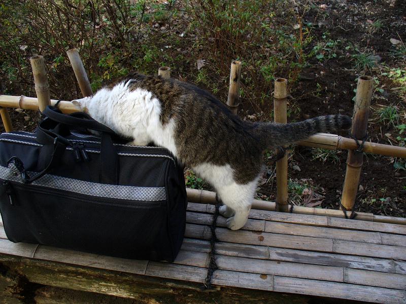 ベンチとバッグとキジ白猫2