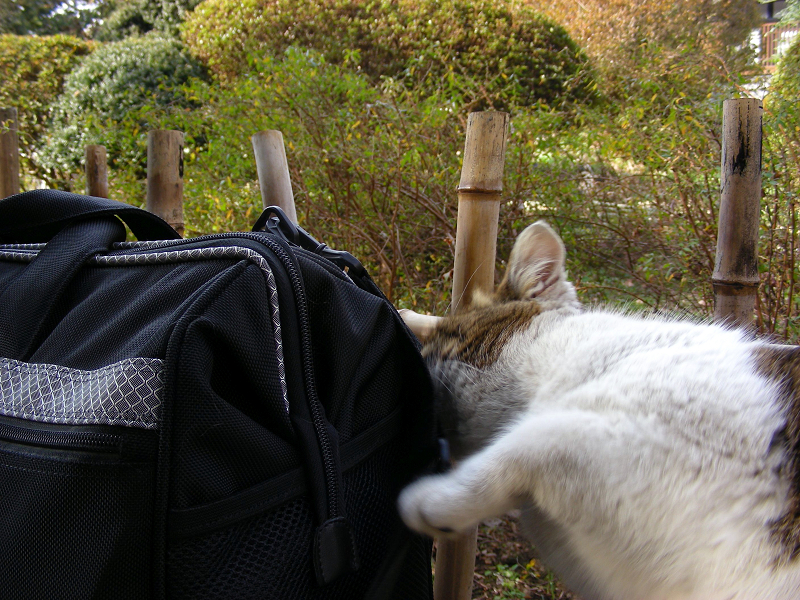 ベンチとバッグとキジ白猫3