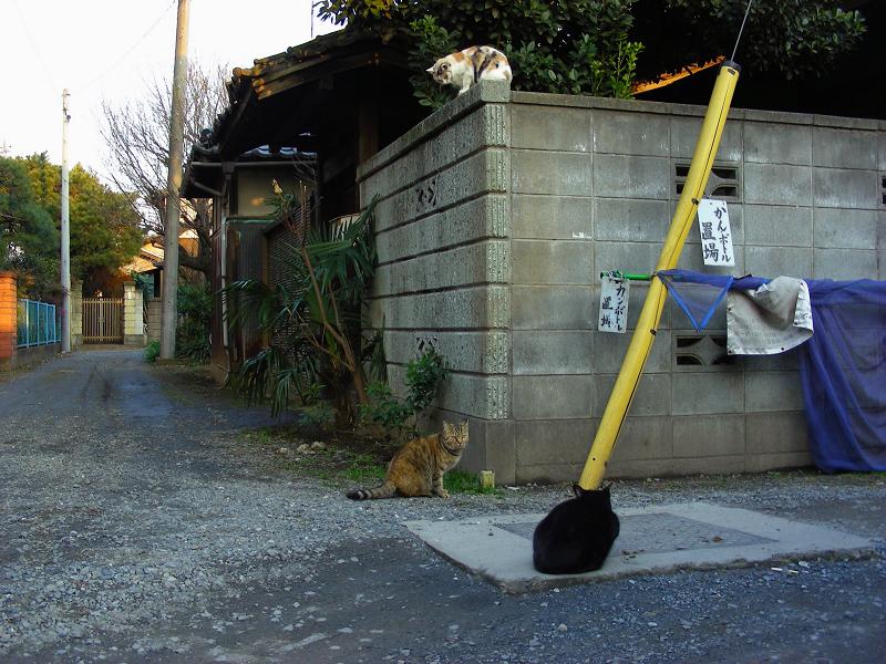 民家ブロック塀の飼い猫たち3