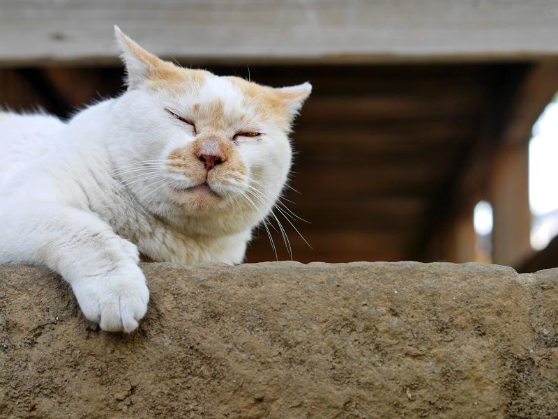 犬走りで寛ぐ白茶猫3