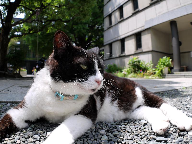 目覚めた友だち黒白猫1