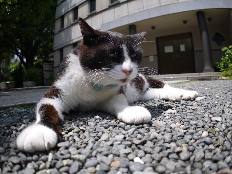 目覚めた友だち黒白猫2