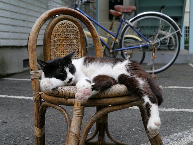 籐製の椅子と黒白猫1