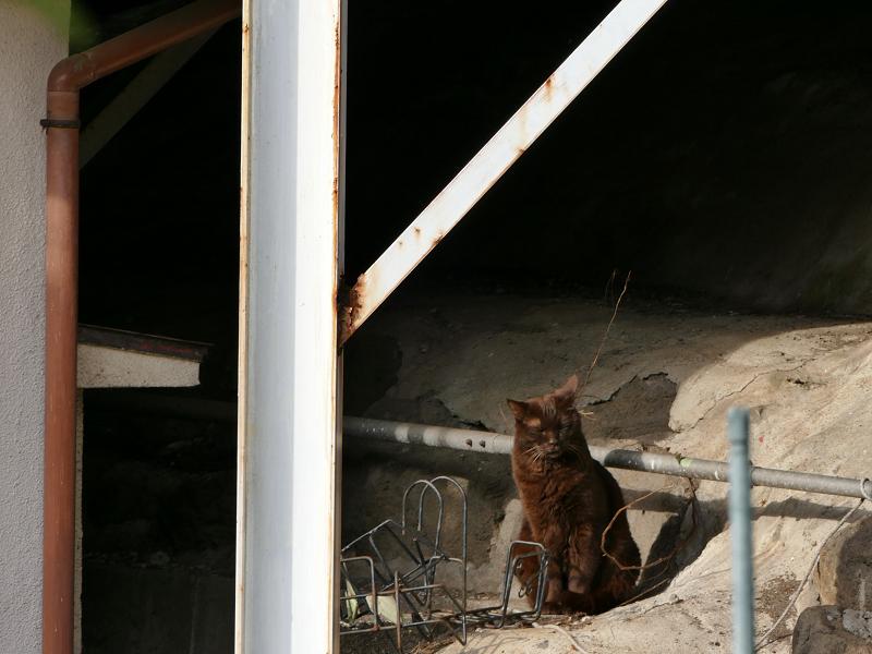 崖下の黒猫2