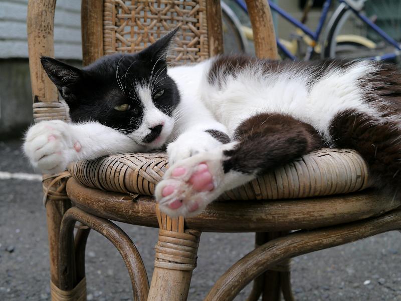 籐製の椅子と黒白猫3