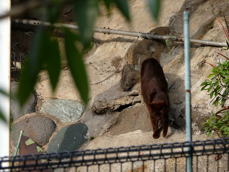 崖下の黒猫3