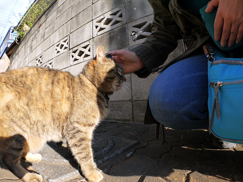 判り合ったキジトラ猫2