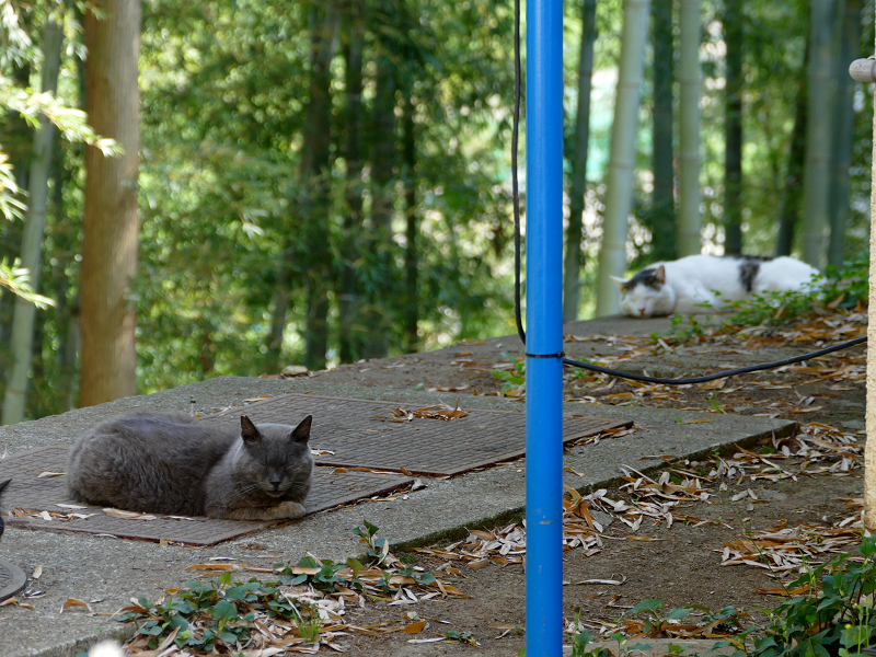 風の通り道猫3