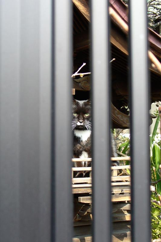 祠と黒猫1